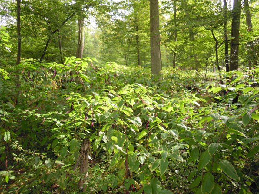 Parcelle 752 de la forêt de Fontainebleau en 2010